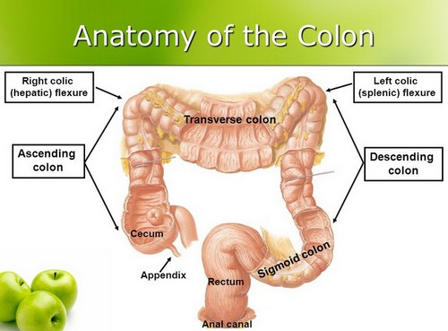 The anatomical presentation of the colon.image